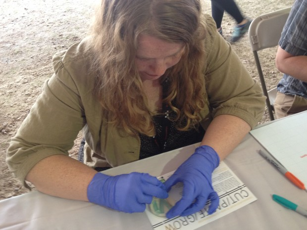 Virginia Ingram traces over her design in a petri dish with bacteria that will glow green.