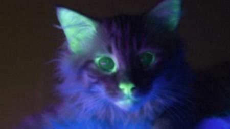 frankcat_web