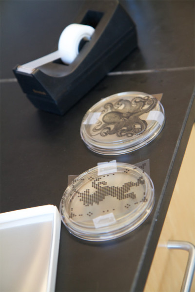 My unicorn and Wythe's octopus transparencies taped on top of our Petri dishes